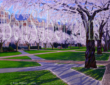 Cherry blossoms at the University of Washington Picture